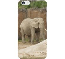 Metroparks Zoo 2 iPhone Case/Skin