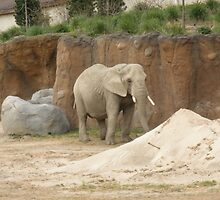 Metroparks Zoo 2 by BarbBarcikKeith