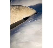 Sleeping Swan Photographic Print