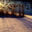Winter Warmth by funkyfacestudio