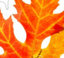autumn maple-leaf Sticker