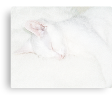 good boy when asleep Canvas Print