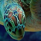 THE TURTLE  by TIMKIELY