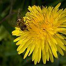 Golden nectar meal by steppeland
