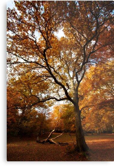 The beauty of Burnham Beeches by Donncha O Caoimh