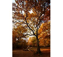 The beauty of Burnham Beeches Photographic Print