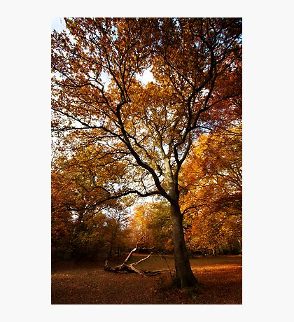 The beauty of Burnham Beeches Photographic Print