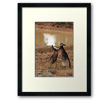 Boxing Kangaroos Framed Print