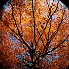 Fall Glow by Christine Corrigan