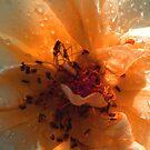 Droplets in Orange by Rosalie Scanlon