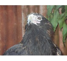 Bird close up Photographic Print