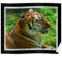 Tiger, Tiger Burning Bright Poster