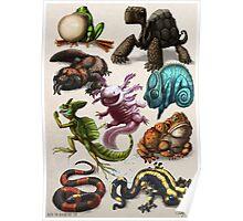 Reptiles & Amphibians Poster