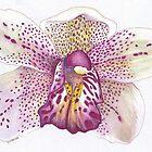 Leopard Lady Orchid by Lynne Kells (earthangel)