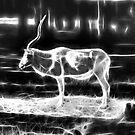 Endangered Animals by miroslava
