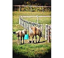 Two Horse Photographic Print