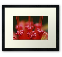 Insect Bar Framed Print