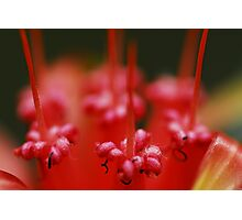 Insect Bar Photographic Print