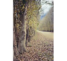 Autumn whisper   Photographic Print