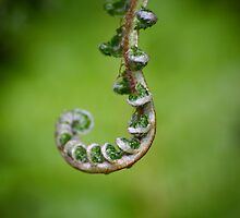 Fern Unfurling by Erland Howden