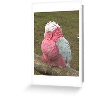 Bird close up Greeting Card