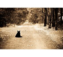 Waiting for his master Photographic Print