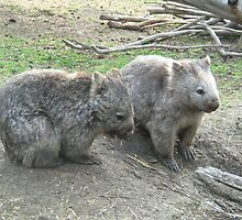 Two wombats by princess-charly