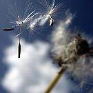 Wishes and Dreams by deannedaffy