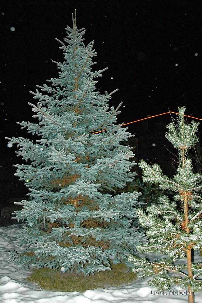 Looking for X-Mas Tree by Denis Molodkin