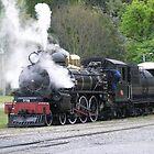 All Steamed Up - Kingston Flyer, NZ by kbend