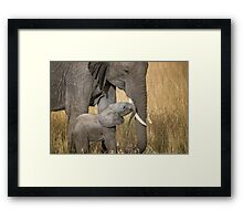 Elephant love Framed Print