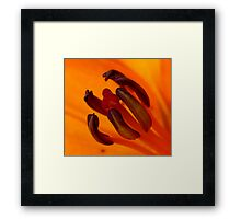 Orange Stamen Framed Print