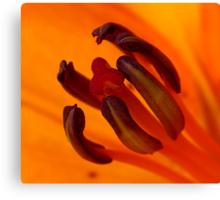 Orange Stamen Canvas Print