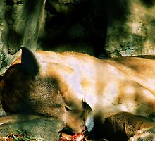 Let sleeping lions lie... by Jen Millard