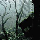 Misty day by pedrovelez