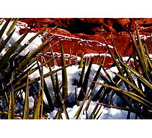 Snow and Yucca, Red Rock Canyon Photographic Print