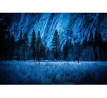 Fir trees, Yosemite Valley with frost and ice Photographic Print
