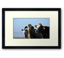 Confident Cows Framed Print