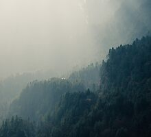 NEPAL:FOG IN THE WOODS by philaphoto