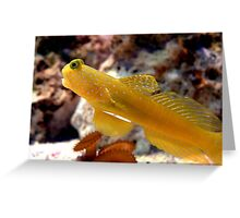 Yellow Watchman Goby Greeting Card