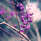 Purple berries (without texture) by liyafendi