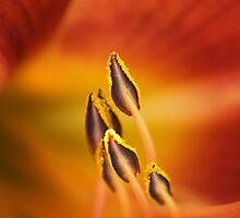 Orange Heart by Steve Chapple