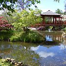 Japanese garden at Emu Valley Rhododendron Garden, Burnie by gaylene
