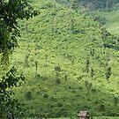 Laotian field hut by David Burren