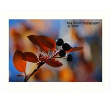 Fall Berry Bokeh Art Print