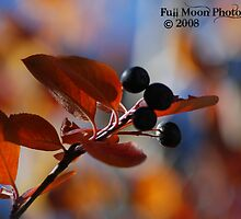Fall Berry Bokeh by Cara Fox