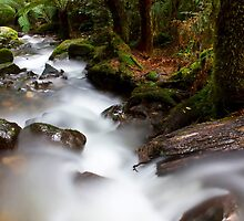 Cement Creek by Greg McMahon