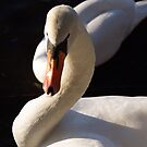 Beauty Swan by misiabe80