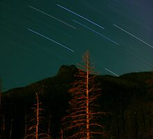 Star Trails by Cara Fox