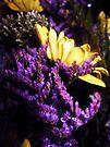 violet by schizomania